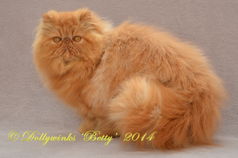 Dollywinks Persian