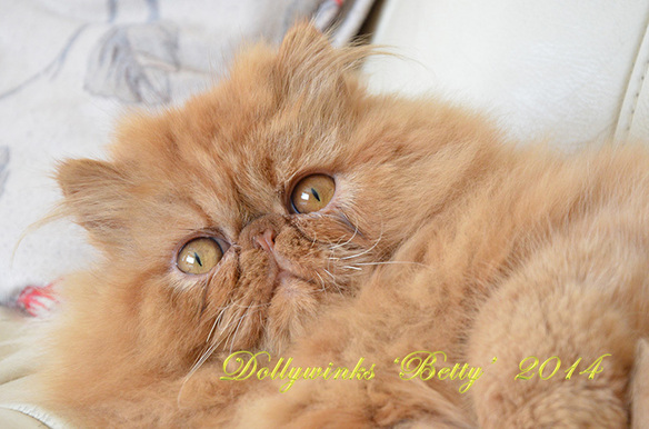 Dollywinks Betty Persian